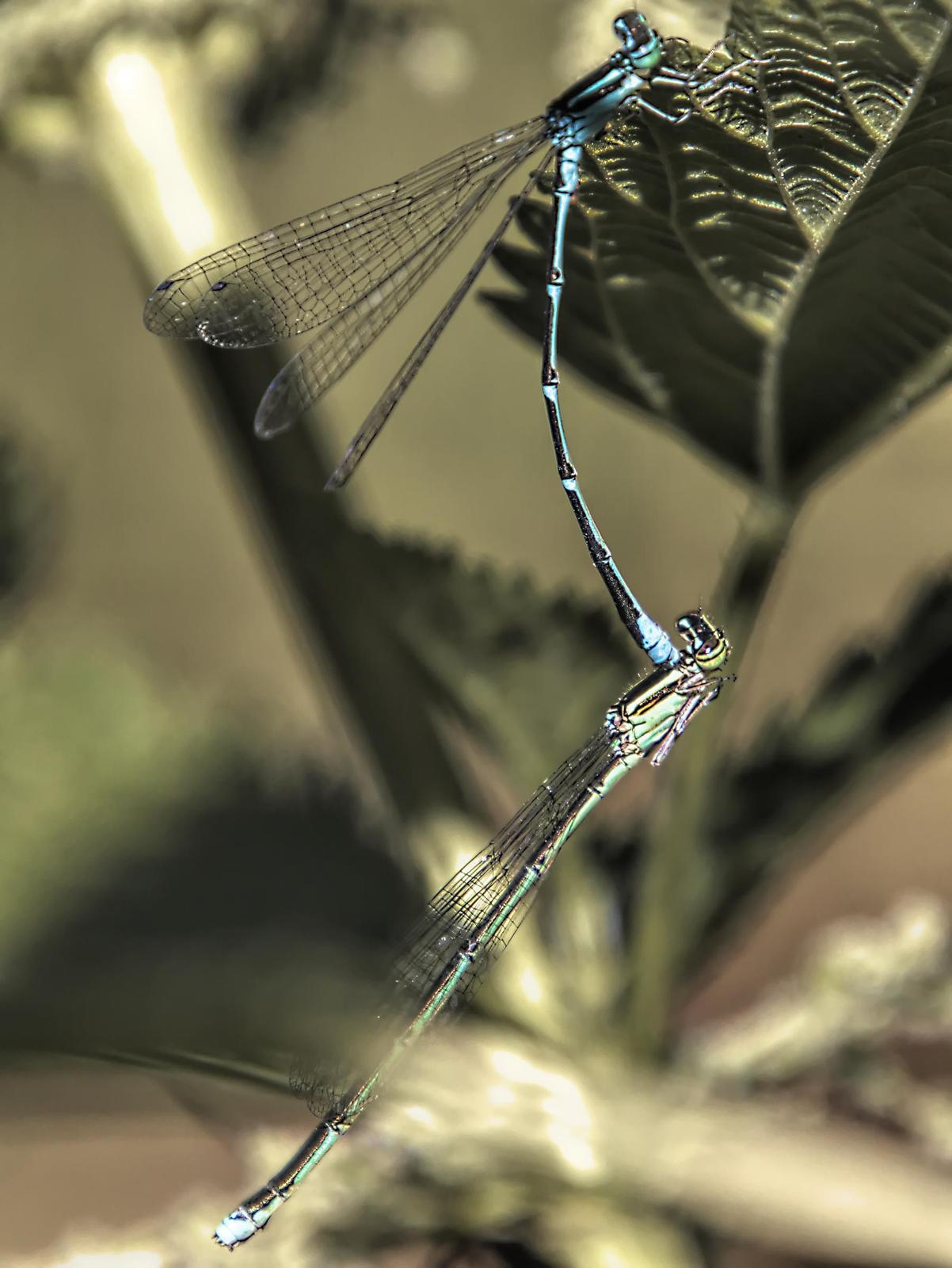Stream Bluet Photo by Dan Tallman