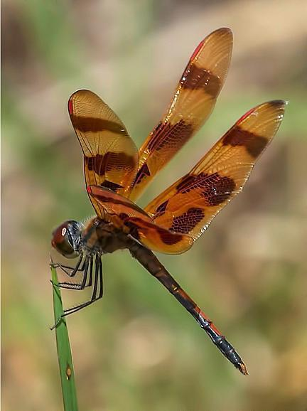 Halloween Pennant Photo by Dan Tallman