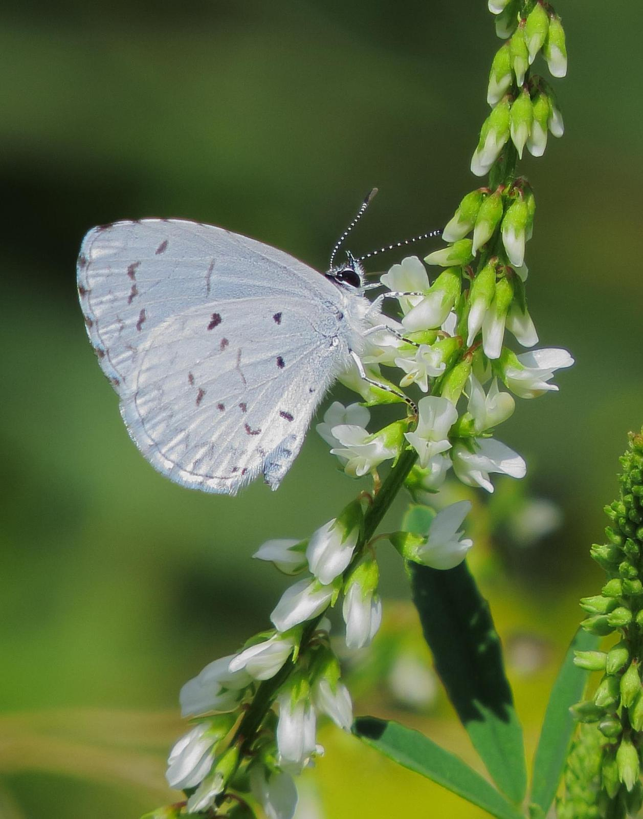 Spring Azure Photo by Kent Jensen