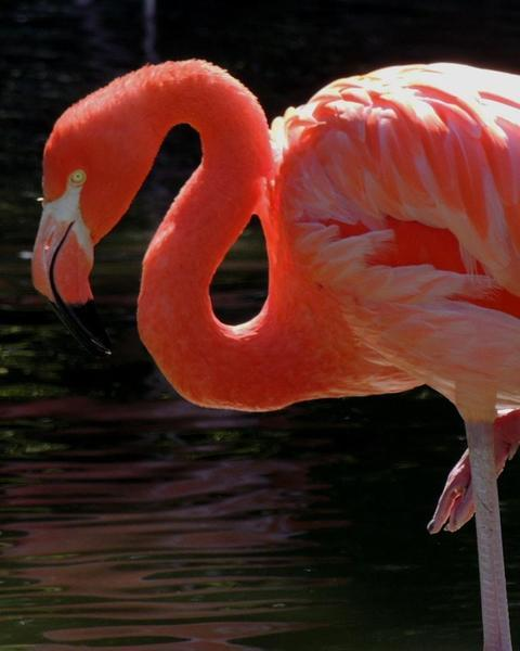 flamingo sp.