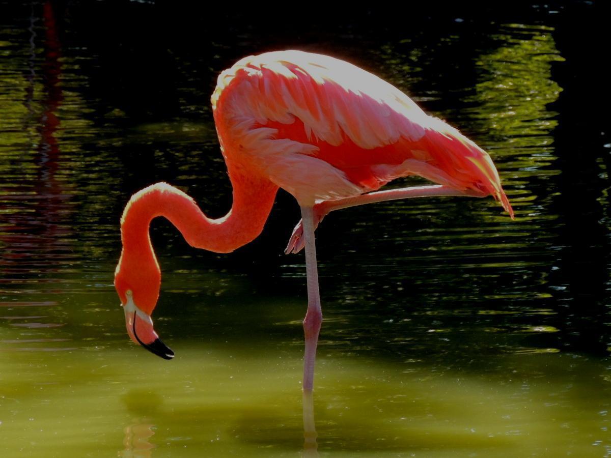 flamingo sp. Photo by Tony Heindel