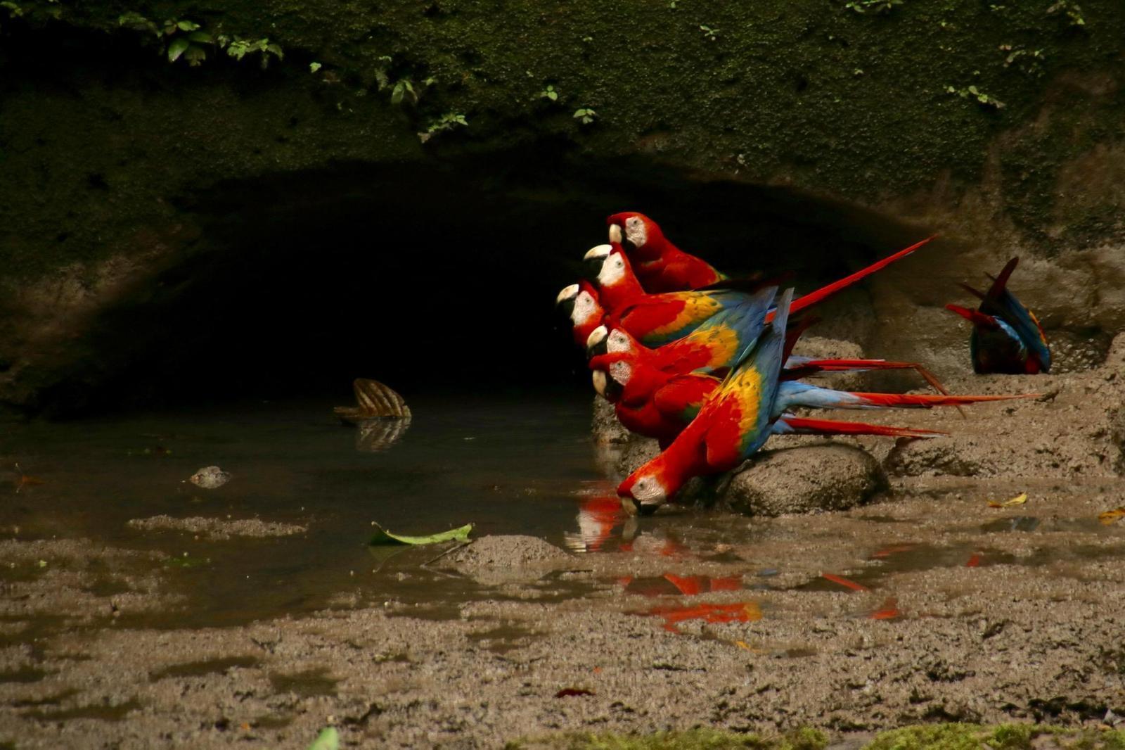 Scarlet Macaw Photo by Kathleen John
