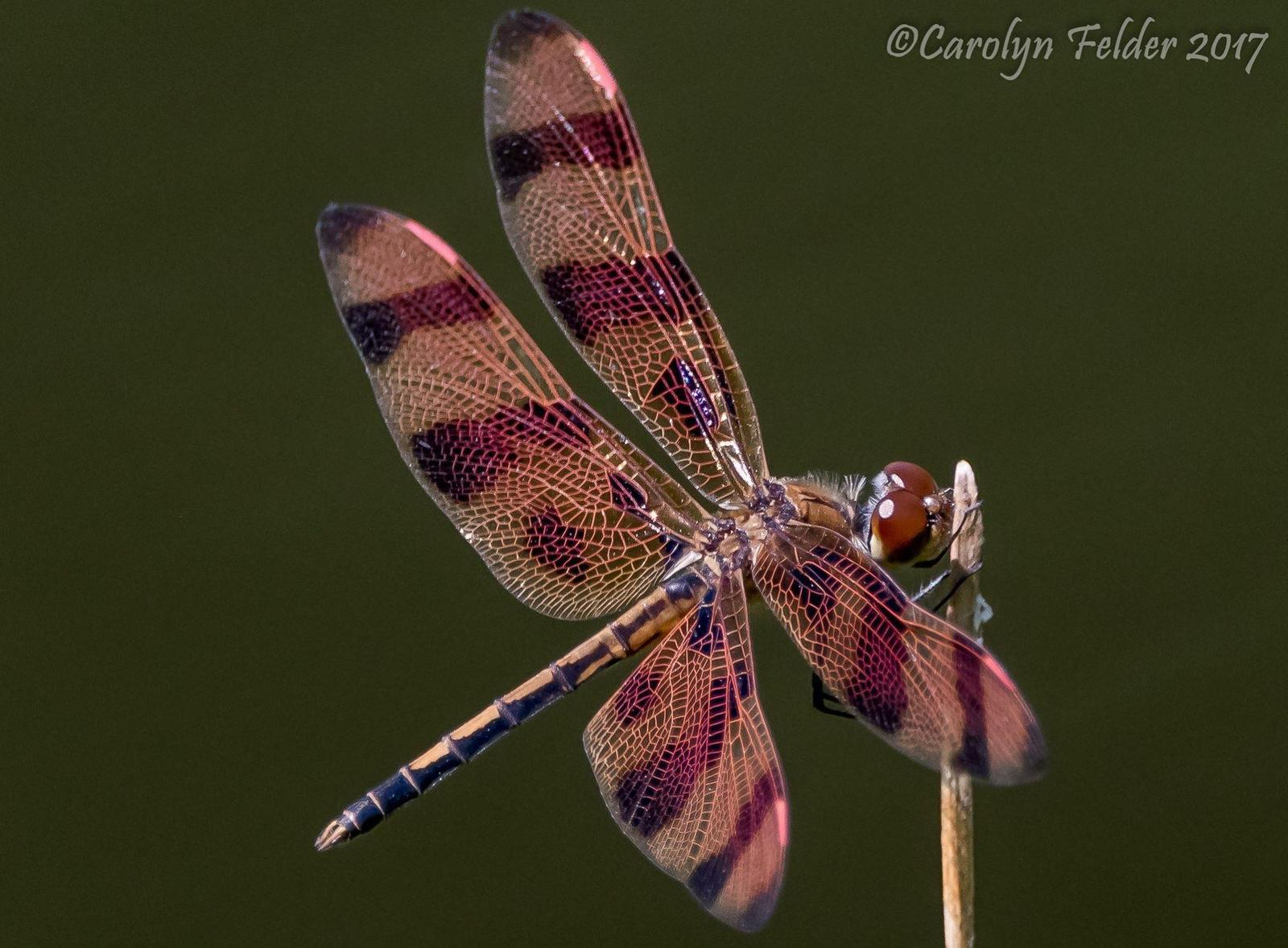 Halloween Pennant Photo by Carolyn Felder