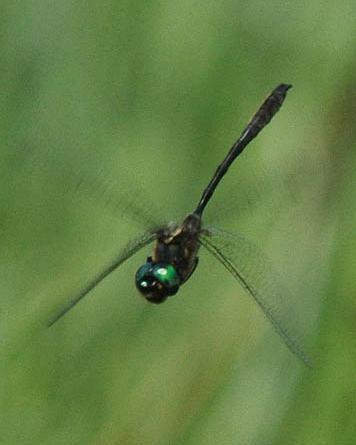 Delicate Emerald