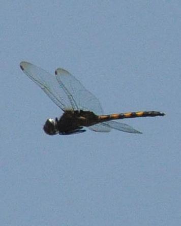 Aztec Glider