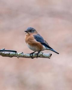 bluebird sp.