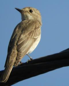 bird sp.